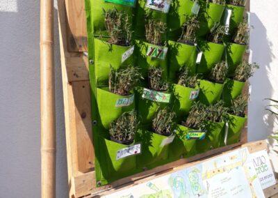 Bambù Alghero 8